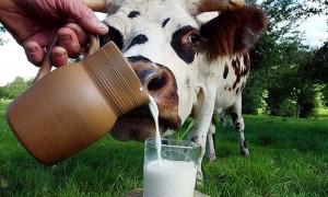 блины без яиц на молоке